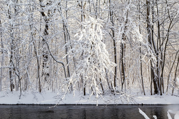 Winter landscape forest snow river water
