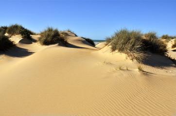 Sistema de dunas en la playa de Camposoto.Cádiz.España