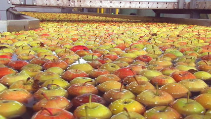 Apples in a production