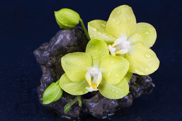 Beautiful spa concept of  yellow orchid with stones and drops