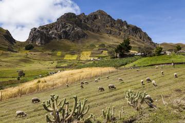 Campos y laderas cultivadas en Zumbahua, Ecuador