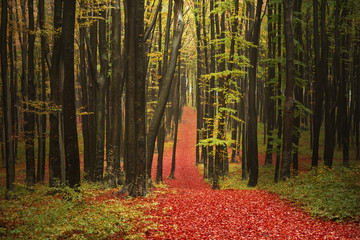Forest trail during autumn