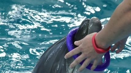 dolphinarium trained dolphins