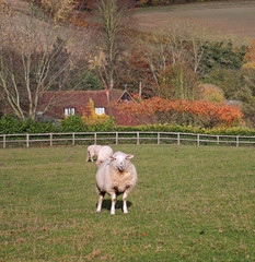 An English Rural Landscape in Autumn