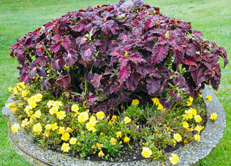 Autumn flowerbed composition