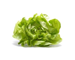 Head of lettuce isolated on white background