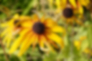 Blurred nature floral background in summer day