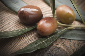 olive branch with three olives from Liguria (Italy)