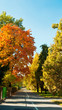 canvas print picture - Herbst in der Stadt