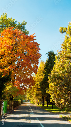 canvas print picture Herbst in der Stadt