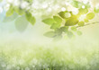 Green, sunny natural background