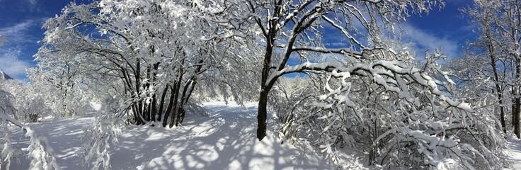 Look the snowy wood