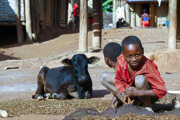 Working poor african children and cow, Madagascar