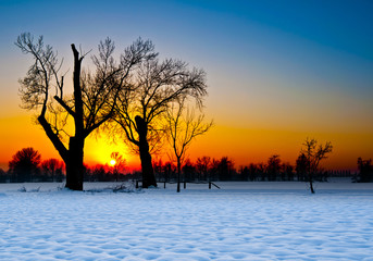 Tree Silhouette at Sunset in a Snowy Landscape
