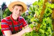 Obrazy na płótnie, fototapety, zdjęcia, fotoobrazy drukowane : Mann pflegt Gemüse im Garten