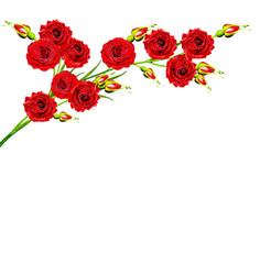 branch of flowers rose isolated on white background