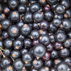 blackcurrant top view
