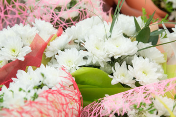 many chrysanthemums in bright packages