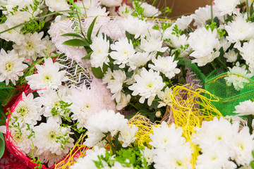 chrysanthemums in bright packages