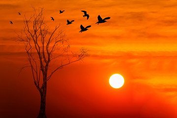 silhouette of birds with dead tree against beautiful sunrise bac