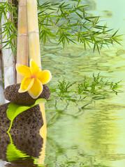 bambous, fleur de frangipanier sur galets