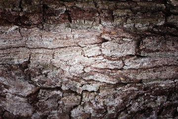 Tree bark abstract background. Retro style process.