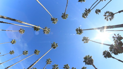 Circle of Palms 1