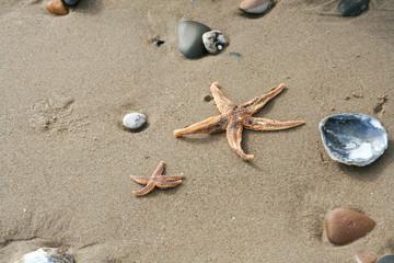 Shells and pebbles lying randomly on beach