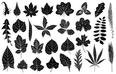 Illustration of different leaves isolated on white