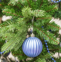 blue sphere on a fir-tree