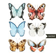 Butterly set - 77983105