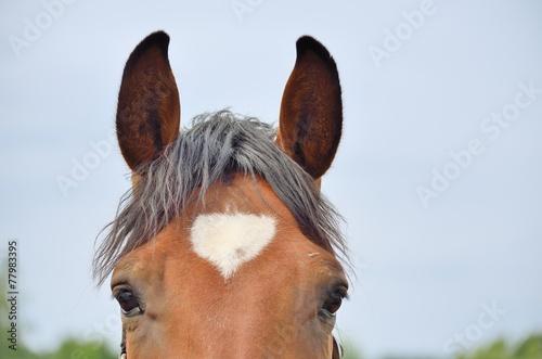 Pferdestirn mit weißem Herz - 77983395