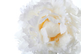 Fototapety macro white peony with yellow at the center