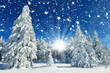 Schneeflocken im Winterwald