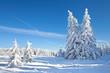 Tannen voller Schnee