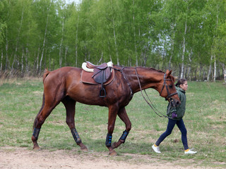 Groom girl with race horse walking