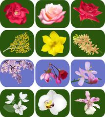twelve different flowers set