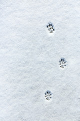 Cat's footprint in the snow