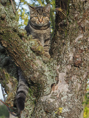 Kätzchen auf einem Baum