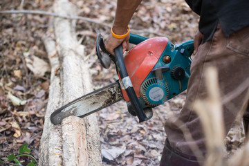 Man cutting the wood with chainsaw