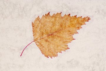 autumn leaf on an ancient paper background