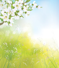 Vector blossoming branch of apple  tree, spring landscape.