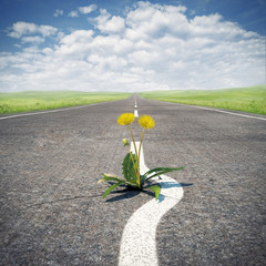 Flower sprouting through asphalt. Concept, save life.