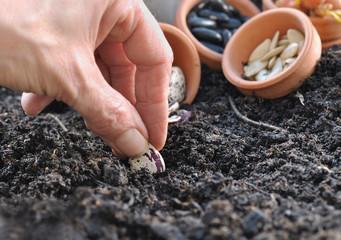 plantation de graines de légumes