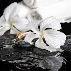 Beautiful spa concept of delicate white hibiscus, zen stones wit © Alisa