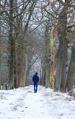 Man walking in a lane of trees on a cold moring in winter.