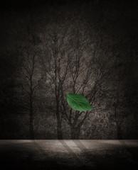 falling healthy leaf