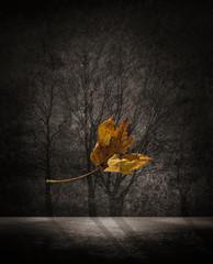 falling dying leaf