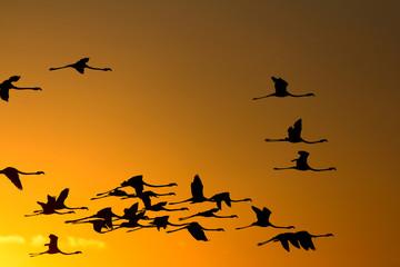 Flying flamingos at sunset