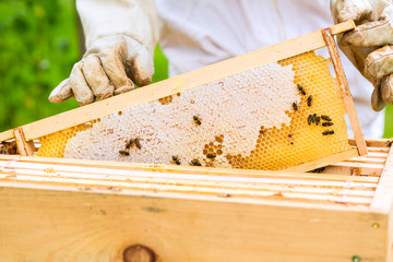 Imker kontrolliert Bienen und Waben